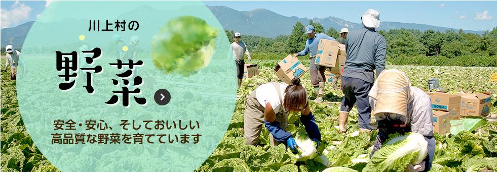観光・PR情報 川上村